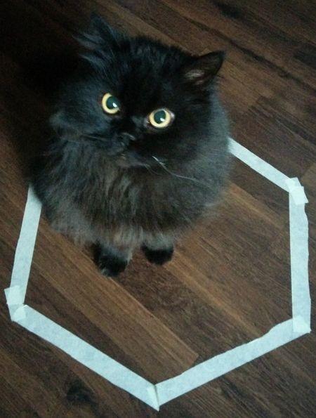 gatos sentados en círculos3