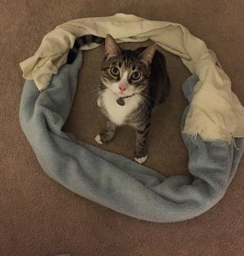 gatos sentados en círculos4