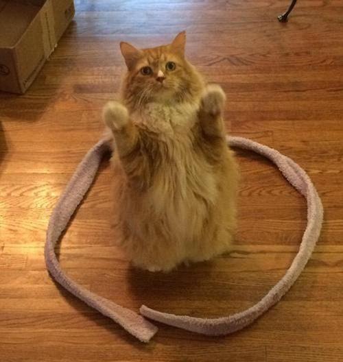 gatos sentados en círculos5
