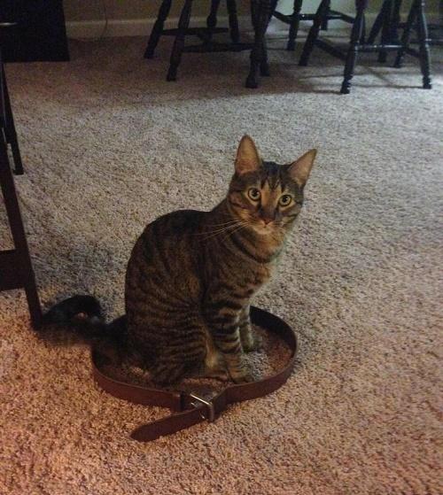 gatos sentados en círculos8