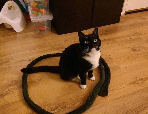 gatos sentados en círculos9