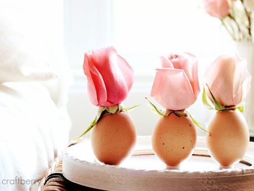eggs17