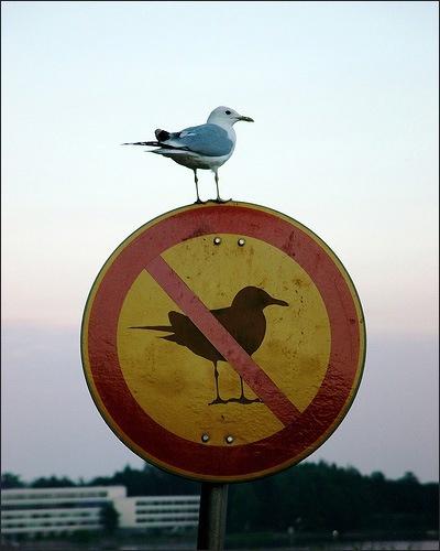 breaking rules15