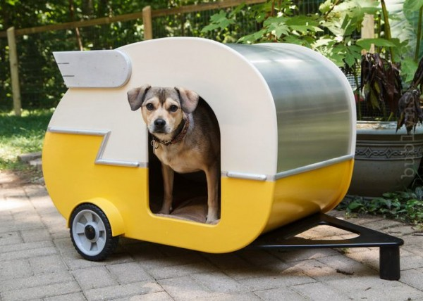camping dog products11