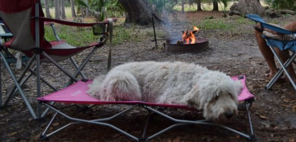 camping dog products13