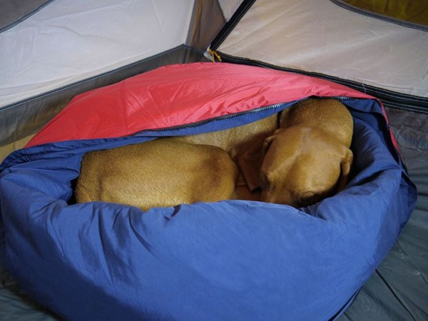 camping dog products16