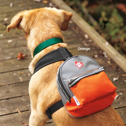 camping dog products17