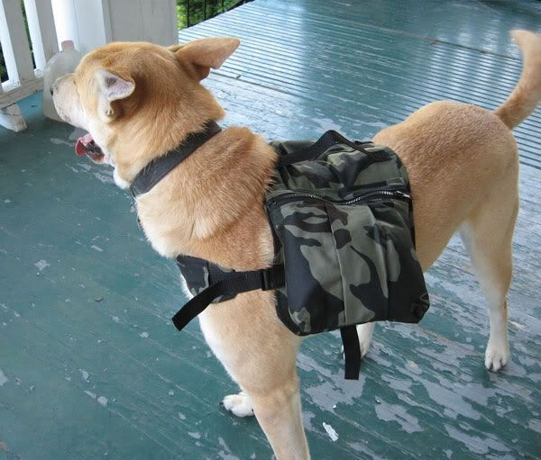 camping dog products4