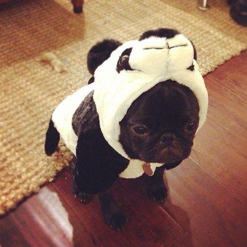 panda bear2