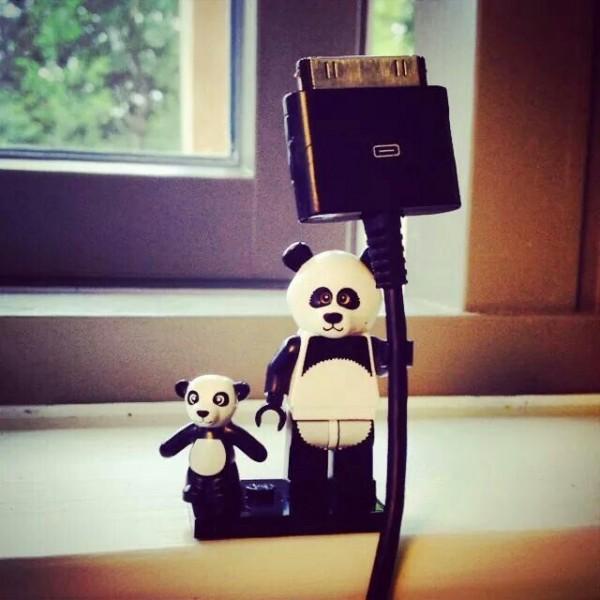 panda bear8