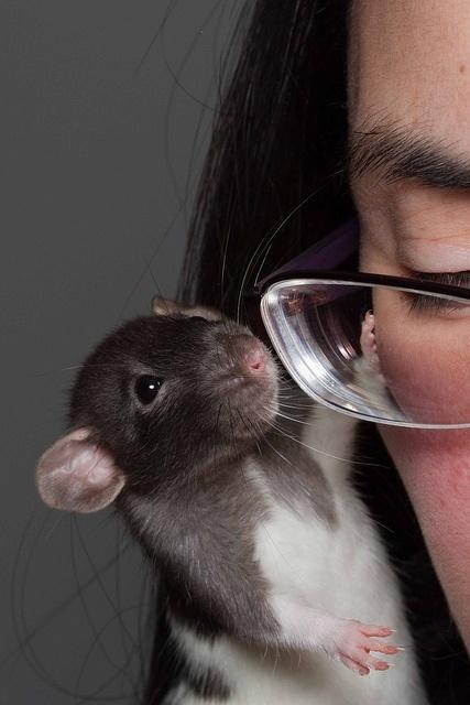 rats7