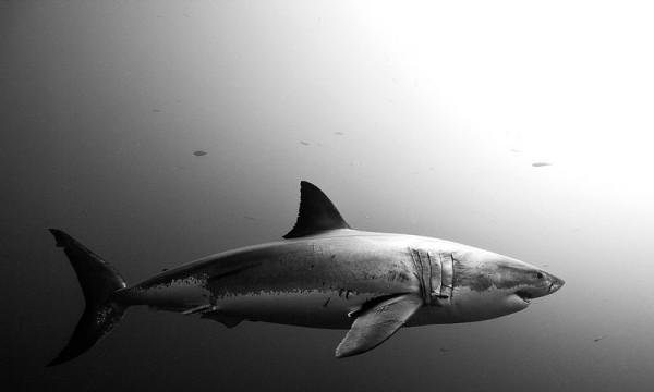 underwater-animal-photography-by-jorge-cervera-hauser-14