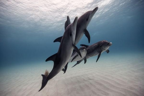 underwater-animal-photography-by-jorge-cervera-hauser-2