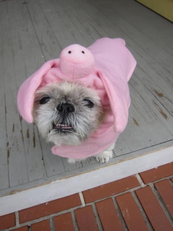 disfrazces para perro