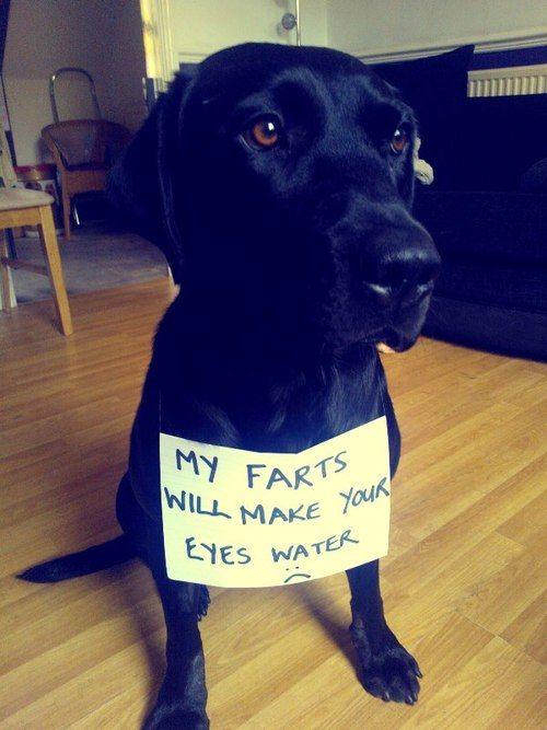 gases perros