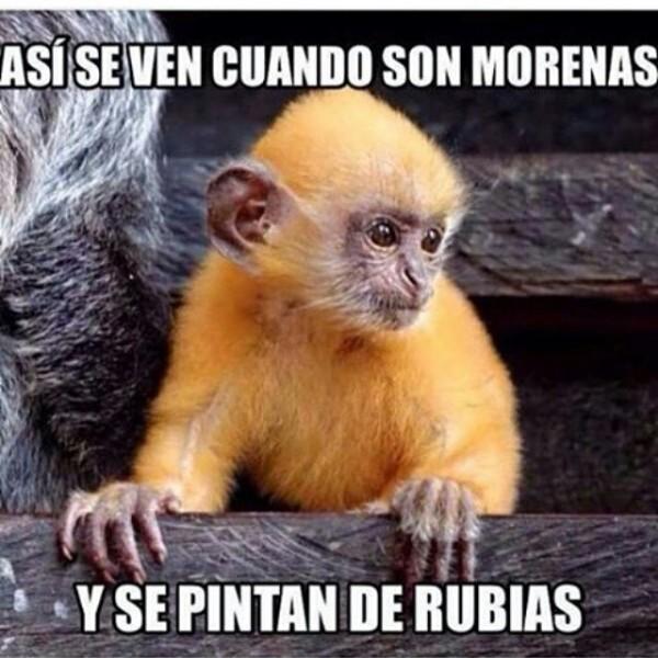 morenas