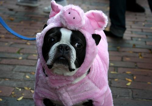 perro difraz cerdo