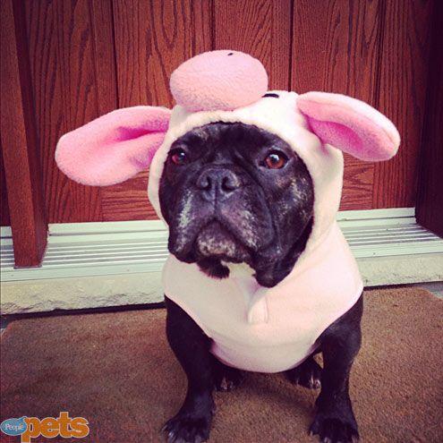 perro disfrazado como puerco