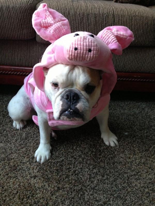 perros disfraz