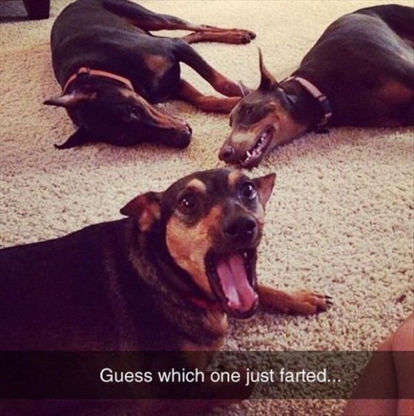 perros flatulencias