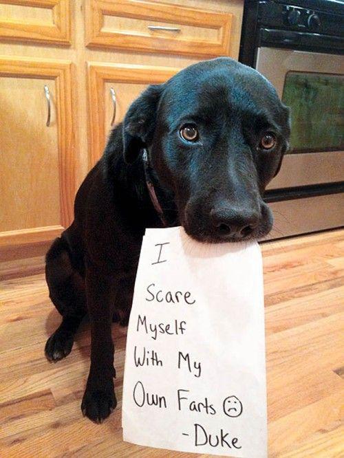 perros letreros