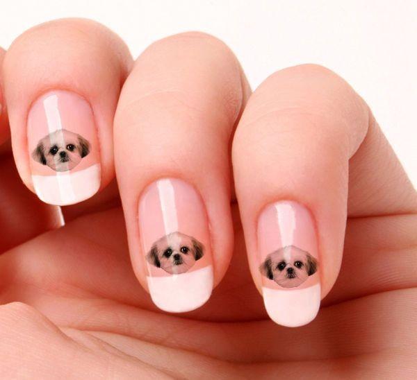 perros uñas
