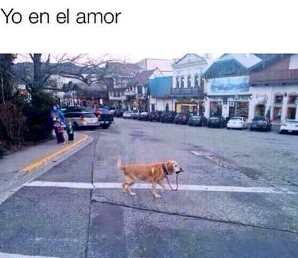 yo en el amor perro
