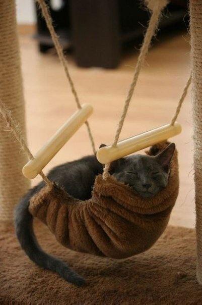 Hammock DIY gato