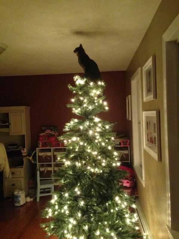 gato arbol anvidad