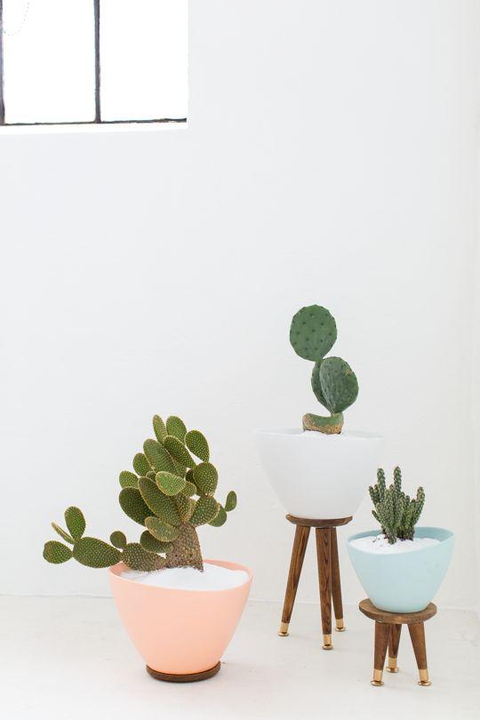 plantas chic