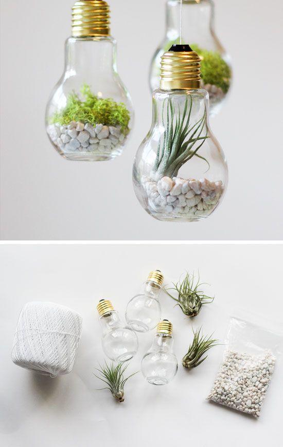plantas focos