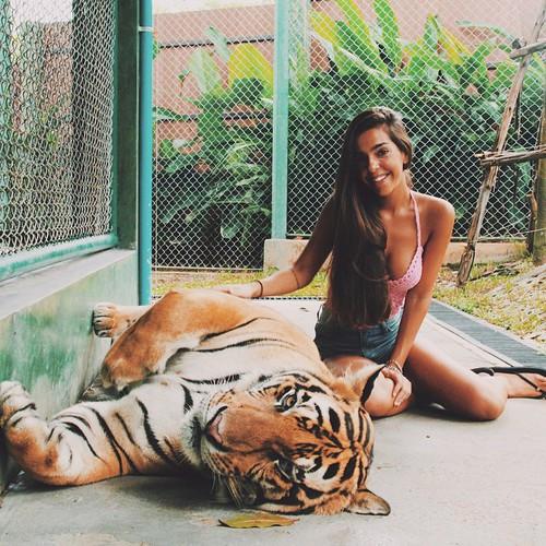 tigre cute
