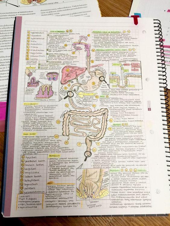 tarea sistema digestivo