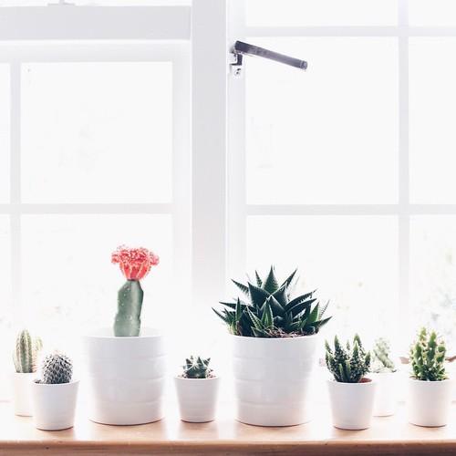 plantitas decoracion