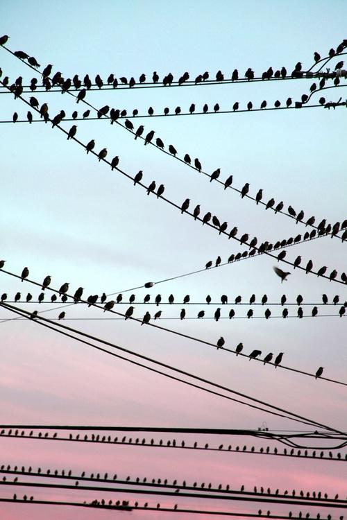 aves inspiracion