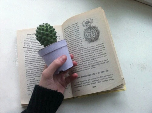 libro planta
