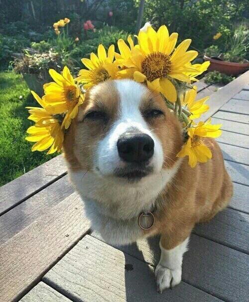 perro flores