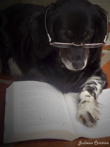 perro estudiando
