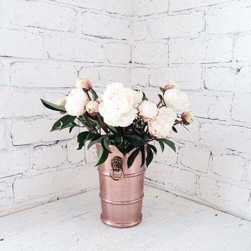 rosa gold cute