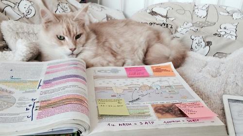 tarea gato