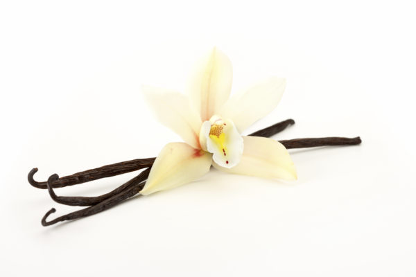 single orchid flower with vanilla beans on white