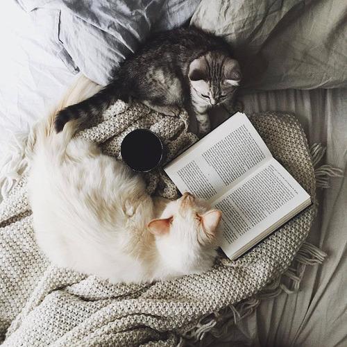 mascota-libro