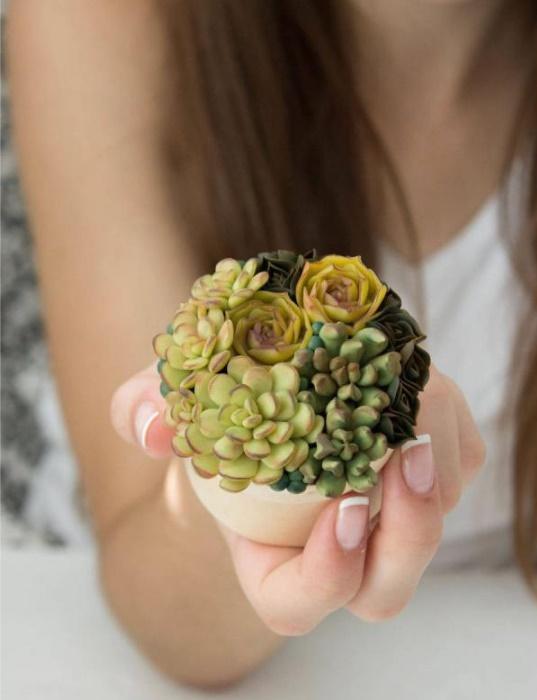 pretty-succulent